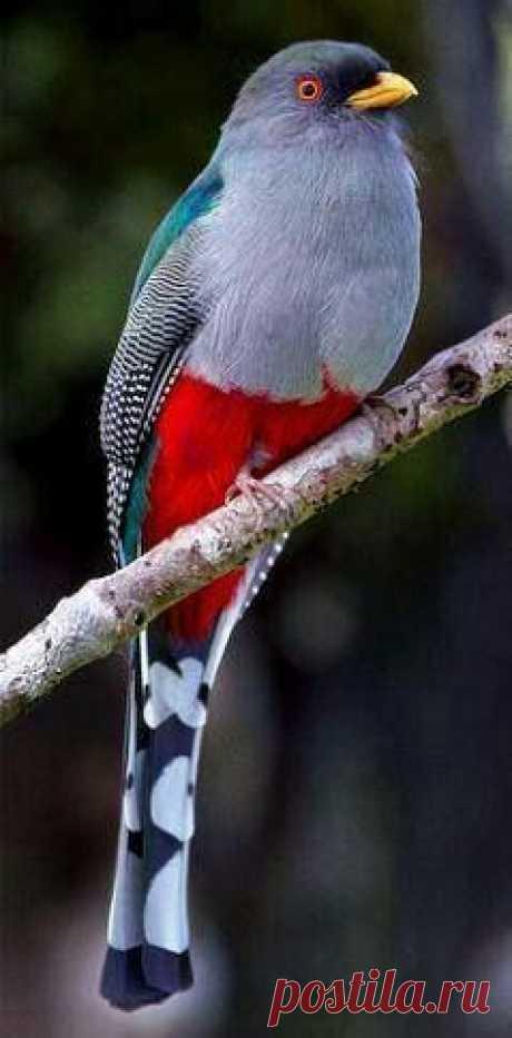 Pássaros e aves coloridas exóticas