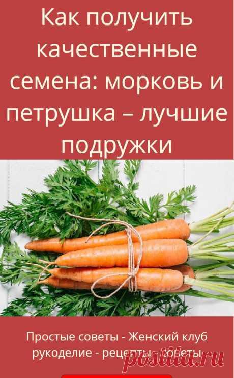 Как получить качественные семена: морковь и петрушка – лучшие подружки