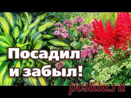 ТОП 5 САМЫХ НЕПРИХОТЛИВЫХ МНОГОЛЕТНИКОВ.  Проверено на Урале!