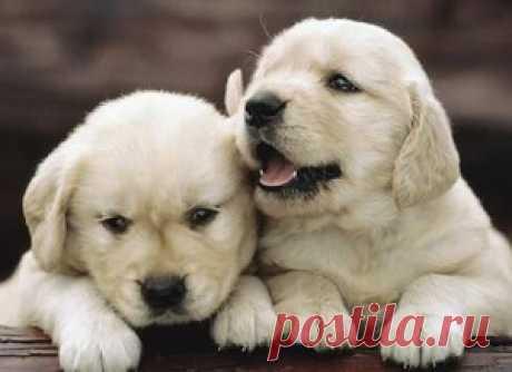 Как выбрать щенка: выявляем тип характера собаки