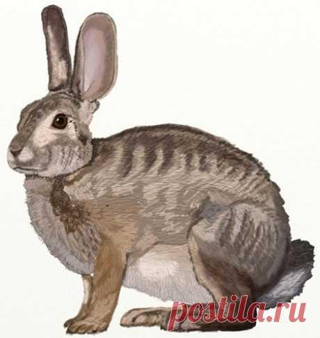 Рисуем зайца — Сделай сам, идеи для творчества - DIY Ideas