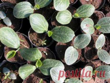(+1) тема - Когда сажать семена на рассаду   6 соток