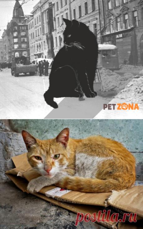 Как коты на войне воевали | PetZona.Ru | Яндекс Дзен