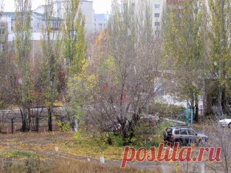 """А вчера было уже так. 18 октября в Барнауле был первый, видимый для всех снегопад. Он начался ранним утром. И остался лежать """"по сю пору"""" под деревьями и в замёрзшей траве. Сегодня с утра солнечно, но  - 2."""