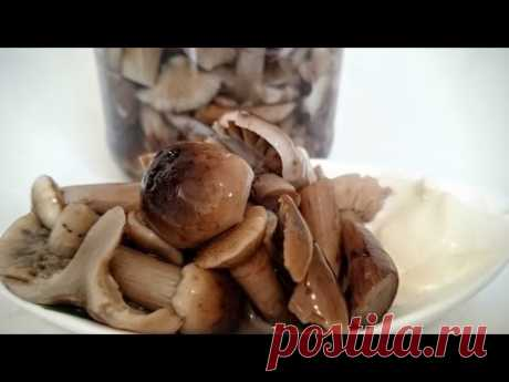 Опята маринованные грибы - Заготовки на зиму Рецепт как мариновать грибы опята вкусная закуска - YouTube
