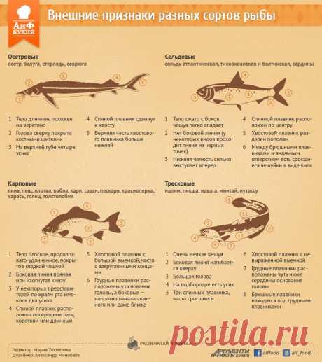 Как отличить дорогую рыбу от дешевой. Инфографика | Продукты и напитки | Кухня | Аргументы и Факты