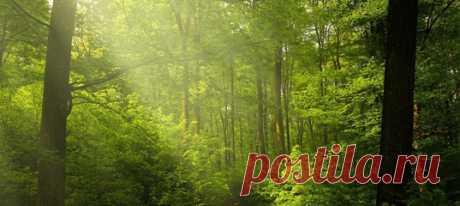 Джадаву Пайенгу 53 года, 37 из которых он в одиночку растит лес на острове Маджули. Начавшийся с одного дерева, сегодня этот лес больше, чем весь Центральный парк Нью-Йорка.