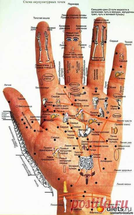 Диагностика по кистям рук и ладоням: : Дневники - diets.ru