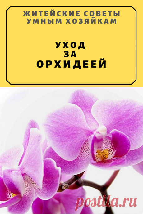 Уход за орхидеей | Житейские Советы