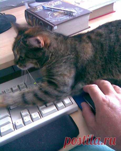 И я могу по клаве стучать... А что?