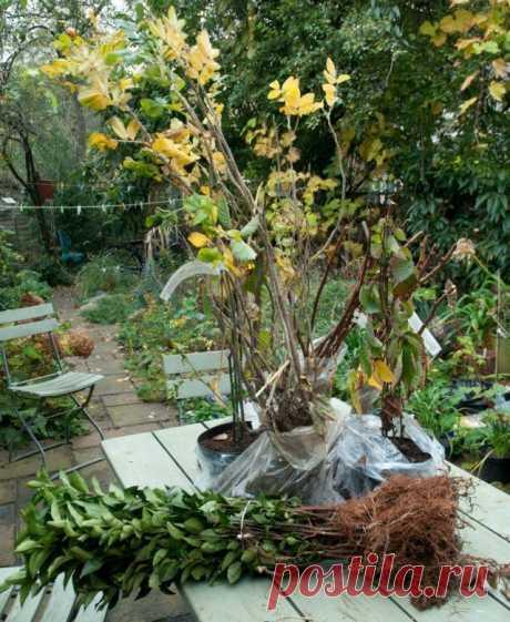 Как правильно посадить малину осенью