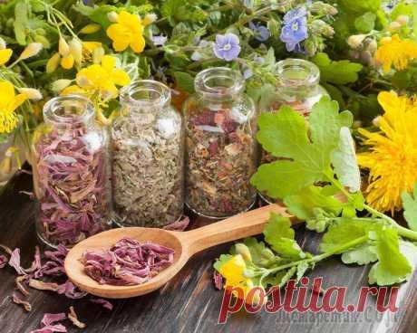 8 hierbas más potentes para la salud femenina, el equilibrio de las hormonas, la eliminación de los síntomas PMS