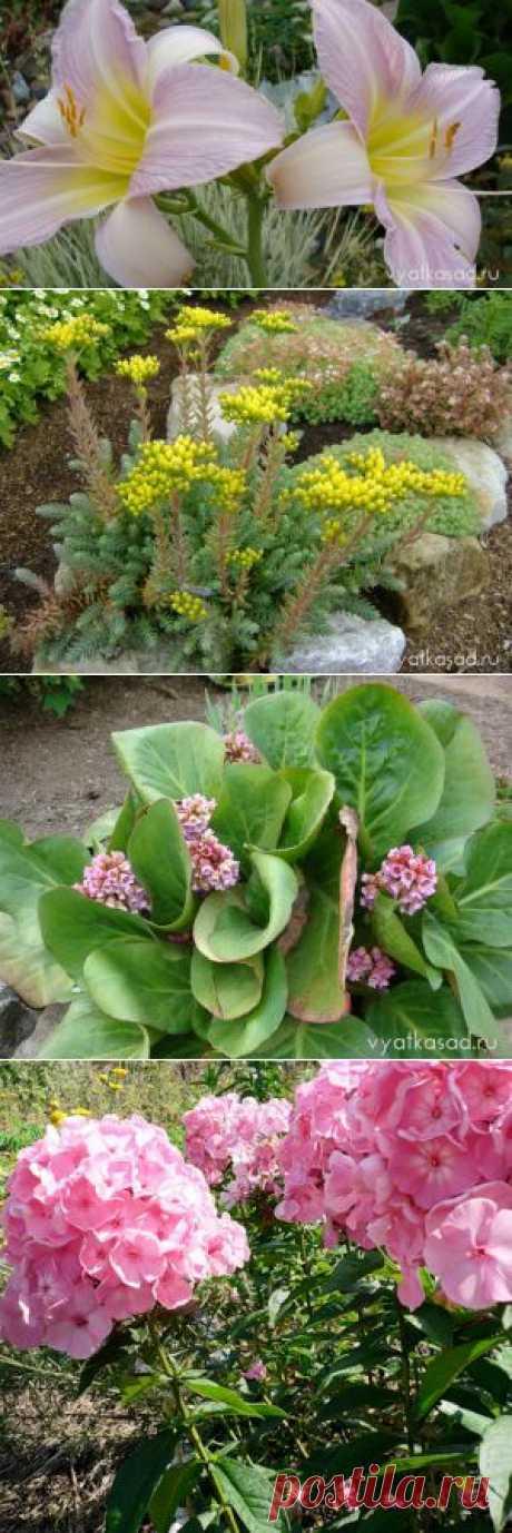 Многолетние цветы для начинающих садоводов.