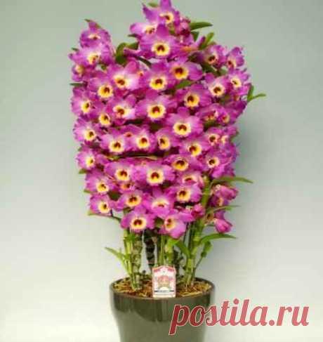 Орхидея — пересадка и уход в домашних условиях