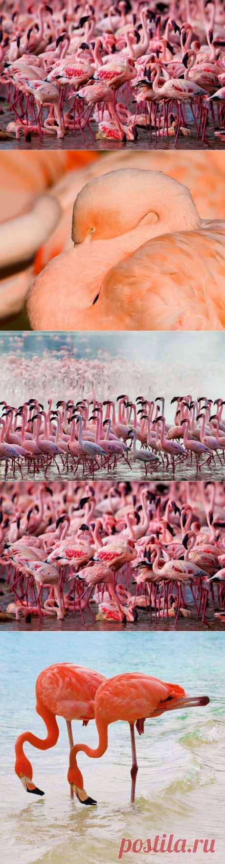 Страна розовых фламинго :  НОВОСТИ В ФОТОГРАФИЯХ