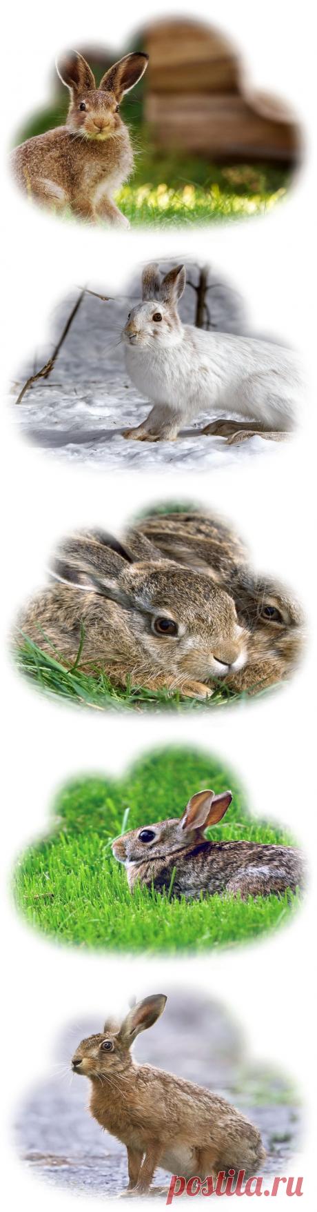 Сонник — К чему снятся Зайцы? Что означает сон про зайца?