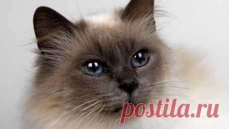 Народные приметы, связанные с кошкой и её окрасом