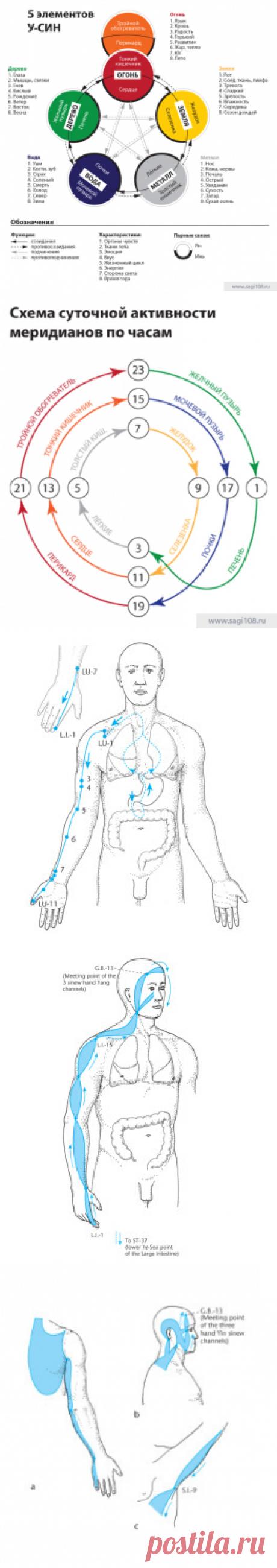 Воздействие на корпоральные мышечно-сухожильные меридианы методами хатха-йоги | Саги Ермолаева