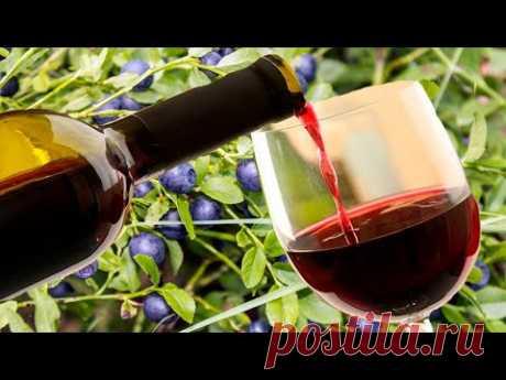 Вино из ягод черники. Часть первая !