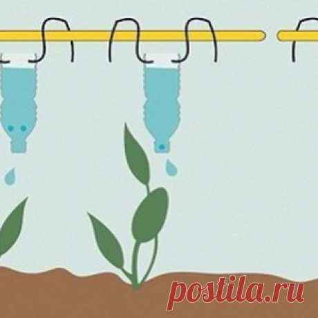 We arrange to plants drop watering. Easy ways to provide seedling in...
