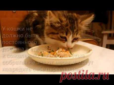 НАТУРАЛЬНОЕ ПИТАНИЕ | ГОТОВЛЮ КОТЁНКУ блюдо из сырого МЯСА