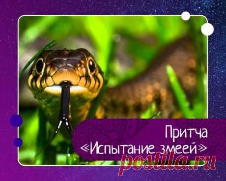 Притча испытание змеей