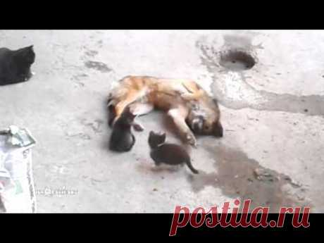 Mother cat with kittens came to old friend / Кошка привела котят к своему другу - YouTube