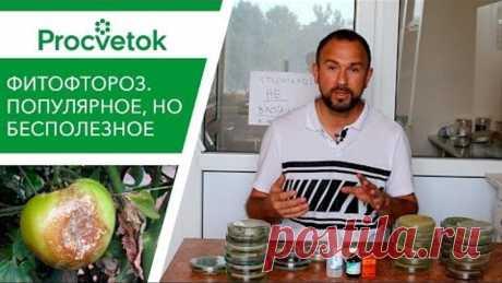 Фитофтора томатов и картофеля. 25 минут на знания или годы на бесполезные супер-средства?