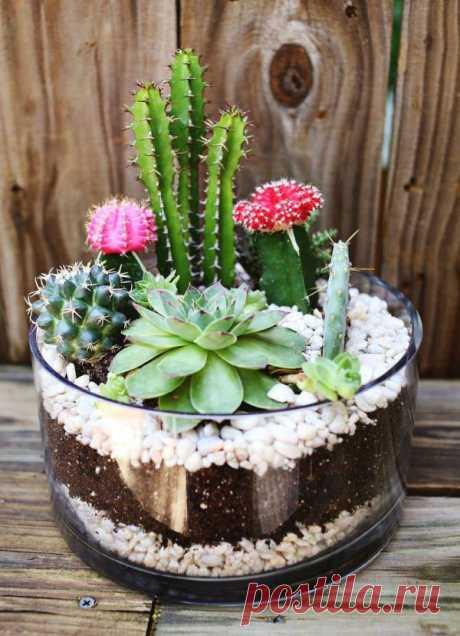 Миниатюрный сад для кактусов своими руками - оригинальная идея декора и альтернатива цветочным горшкам