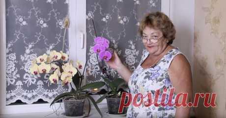 Как простимулировать цветение орхидеи Когда надоедает ждать милости от домашней орхидеи, делаю так.