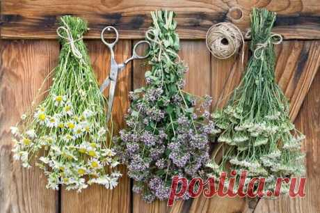 """Как правильно хранить лечебные травы... - Познавательный сайт ,,1000 мелочей"""" - медиаплатформа МирТесен Опытные травники знают, когда какое растение обретает максимальную силу, как его правильно собирать, сохраняя живую энергетику. Действительно ли это так важно? Оказывается, да. Травы просроченные, отсыревшие, утратившие естественный аромат, если и не навредят здоровью, то пользы точно не принесут."""