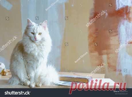 Белый Пушистый Кот Желтые Глаза Сидит Фотография Со Стока (Редактировать Сейчас) 1635621913