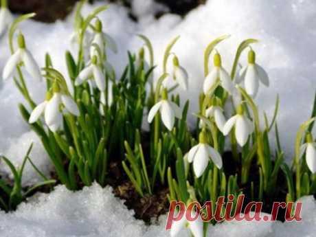 Народные приметы намарт 2020 года Март— первый месяц весны, когда природа начинает пробуждаться отзимней спячки. Народные приметы помогут провести первый весенний месяц удачно иотвести беды отсебя исвоей семьи.
