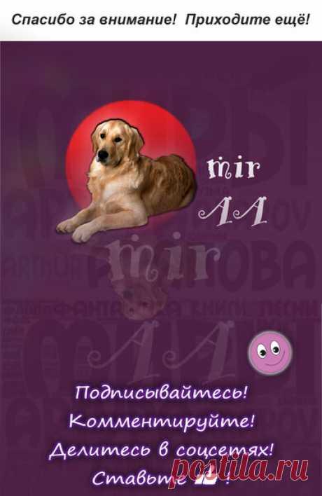 Собачья жизнь | Миры Артура Арапова | Яндекс Дзен