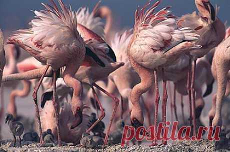 Фламинго.......))))))