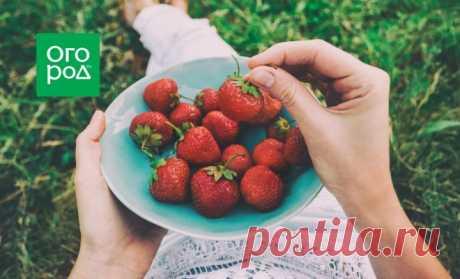 Сколько клубники можно съесть без вреда для здоровья | Полезно (Огород.ru)