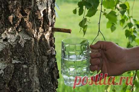 13 лучших рецептов напитков из березового сока на зиму Свежесобранный березовый сок – весьма вкусный и полезный напиток, прекрасно утоляет жажду и тонизирует. Однако он быстро закисает, поэтому для длительного хранения березовый сок стоит законсервировать...