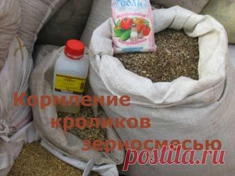 Кормление кроликов зерносмесью (видео) — Яндекс.Видео