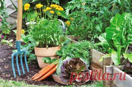 Что посадить в начале июля | Огород на подоконнике | Яндекс Дзен