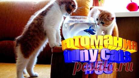 видео котов смешных, видео смешных котов, смешной кот видео, смешное видео котов, видео с котами, видео про котов, видео приколы котов, кот видео, видео с котом, смешные животные, видео смешных животных, смешное про животных, смешное видео животных, животные смешное, коты приколы, кот приколы, кота приколы, коты и приколы, кошки видео смешные, смешные кошки видео, смешные про кошек, смешные видео кошек, смешное видео кошка, смешно кошки, видео кошек смешные, кошек смешные, видео с кошками