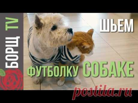 Одежда для собак из старых вещей   Как сшить одежду для собак своими руками