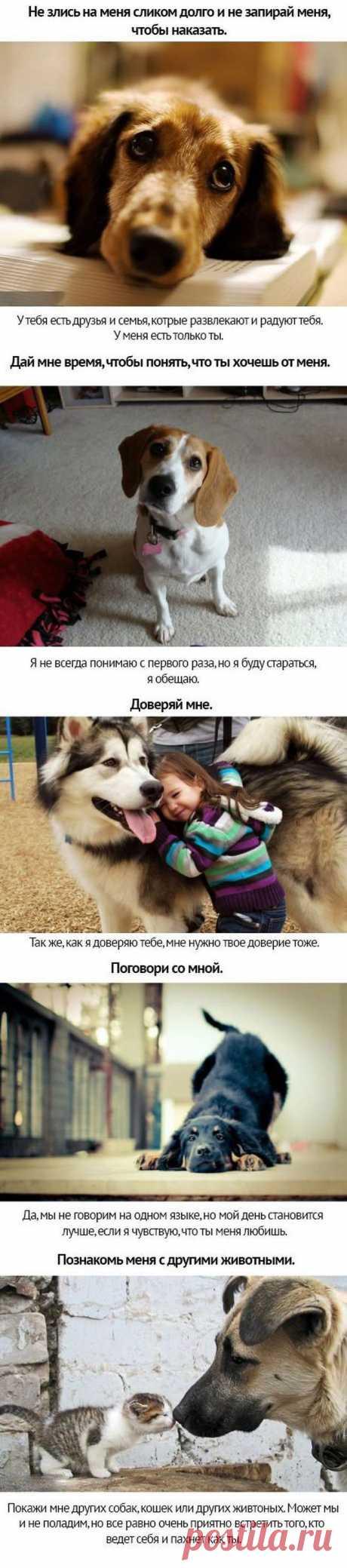Собачьи просьбы - обрати на меня внимание...