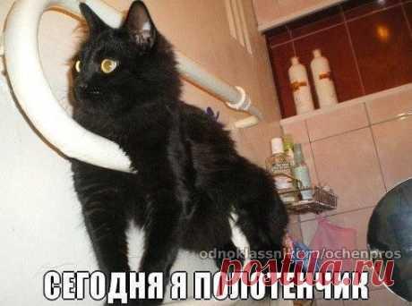 Полотенчико шерстяное)