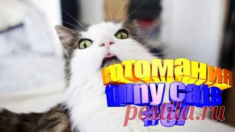 видео котов смешных, смешное видео коты, кот смешной видео, кот смешное видео, видео кот том, том кот видео, коты воители видео, видео про кота, видео кота, видео животные смешные, видео животных смешные, видео смешное животные, животные смешно, смешных животных, приколы котов, прикол котов, приколы с котом, смешные коты, кошки смешное видео, про кошек смешное, смешное кошки, смешные видео кошек, кошки смешное, смешно кошки, смешно про кошек, кошек смешные, видео кошки, кошка видео, кот смешной