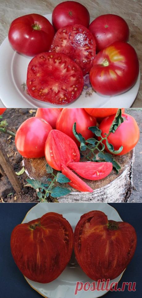 Крупноплодные низкорослые сорта томатов, которые я выращиваю не первый год, с хорошими вкусовыми качествами   Записки огородницы   Яндекс Дзен