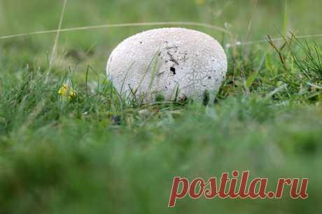 Куда пойти за весенними грибами? Бонус: где найти для них интересные рецепты   МТС/Медиа   Яндекс Дзен