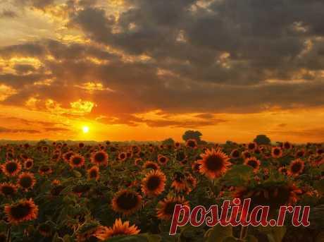 oleg-sonin — «Утомлённые солнцем» на Яндекс.Фотках