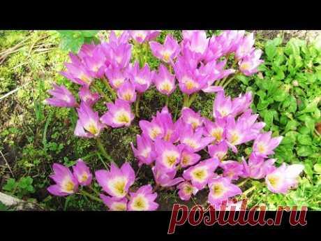сайт цветы в саду - 26 тыс. роликов. Поиск Mail.Ru