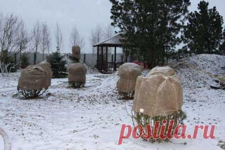 Лучшие материалы для зимнего укрытия растений | Дела огородные (Огород.ru)