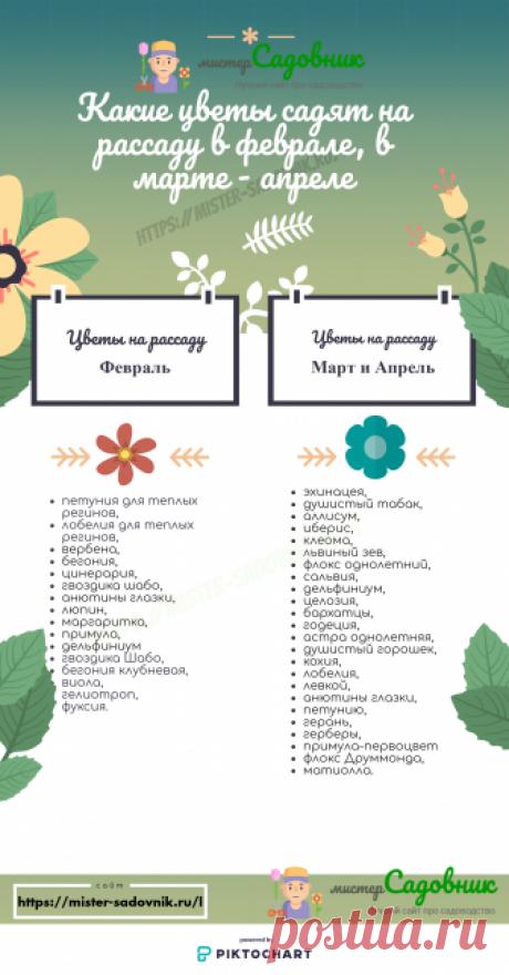 Однолетние цветы на рассаду - правила посадки и ухода